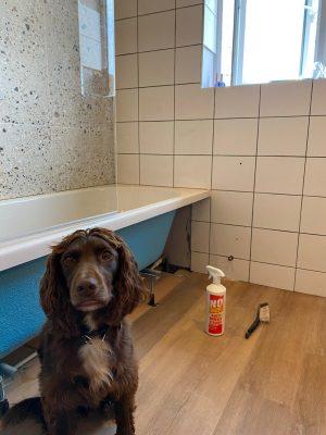 Straight swap bathroom Parkstone Yorkshire's little 4 legged helper!