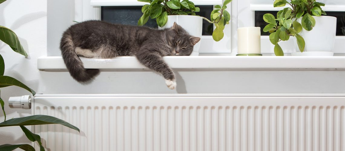 a cat asleep on a window sill directly above warm radiators